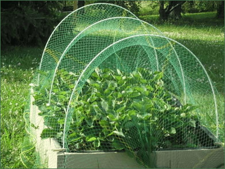 Photo of Заштита на зеленчукот и цвеќињата од изгореници со помош на мрежи за засенување