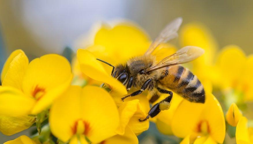Photo of Истражувачите откриле нови 27 пчелни вируси!