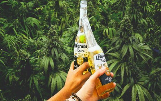 Сопственикот на пивото Corona инвестира 4 милијарди долари во марихуана