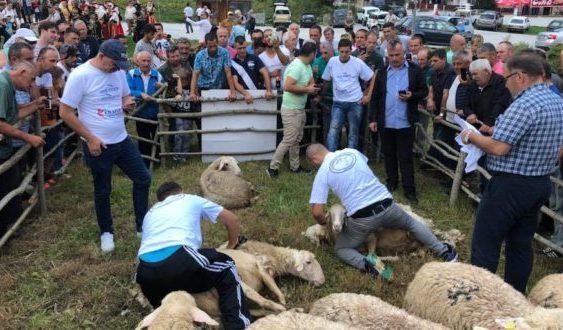 Денови на овчарството во Маврово по 12 пат
