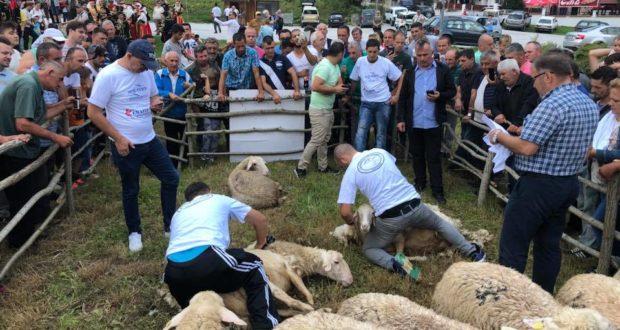 Photo of Денови на овчарството во Маврово по 12 пат