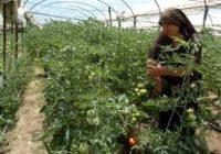 КАЛЕНДАР НА ЗЕМЈОДЕЛЦИТЕ ЗА МЕСЕЦ АВГУСТ- Градинарство