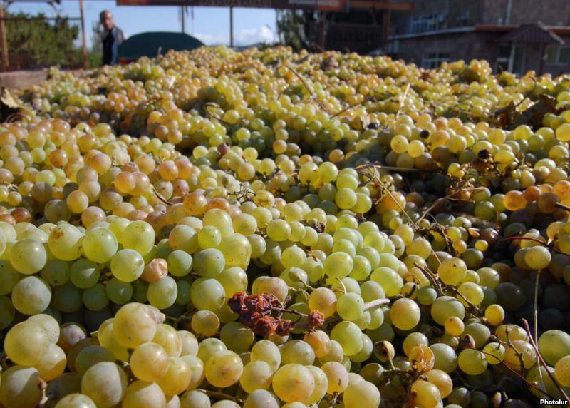 Photo of Владата одлучи дополнителна субвенција од два денари за килограм грозје