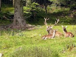 Photo of Постапката за доделување концесија на дивечот во 10 ловишта во државата започна