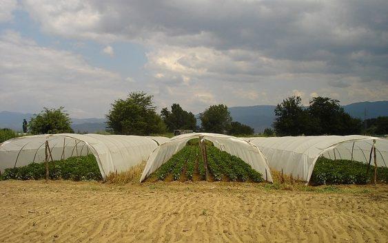 """Регион """"мотор"""" на македонското земјоделство – може ли да ја нахрани државата?"""