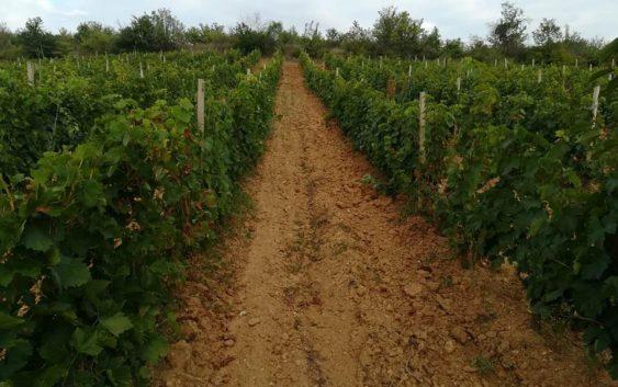 Со квалитетно грозје и одличен маркетинг македонските вина може да бидат конкурентни на пазарот