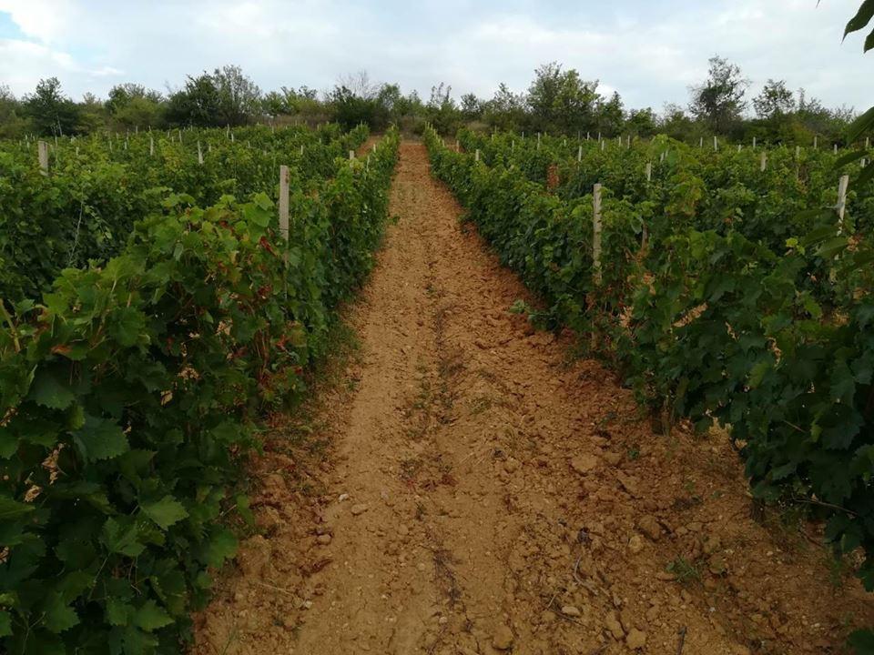 Photo of Со квалитетно грозје и одличен маркетинг македонските вина може да бидат конкурентни на пазарот