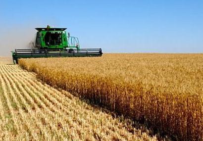 """Photo of Според податоците на """"Продуктна берз"""": Цената на пченицата и понатаму расте"""