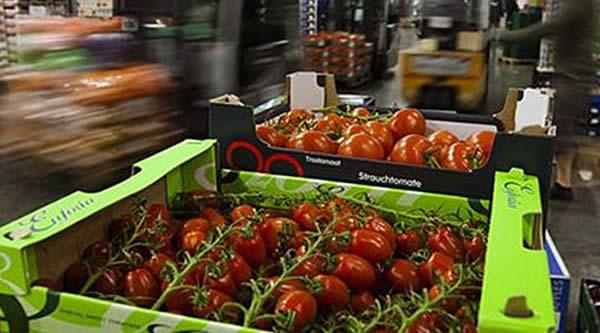 Photo of Преполовен извозот на македонски зеленчук во Русија