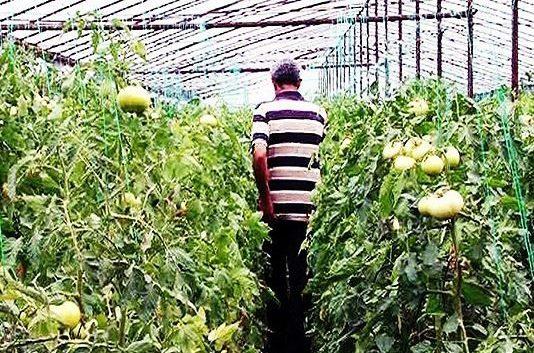 Колкава е просечната старост на македонскиот земјоделец?