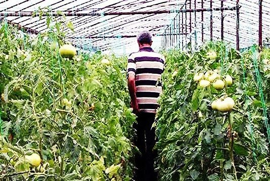 Photo of Колкава е просечната старост на македонскиот земјоделец?