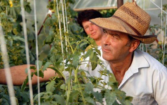 МОЖЕ ДА СЕ ЗАРАБОТИ БРЗО: Засадете и за неколку месеци парите двојно ќе се вратат