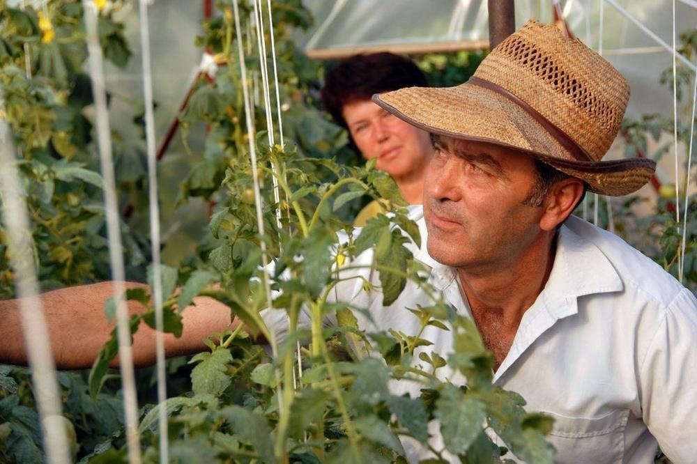 Photo of МОЖЕ ДА СЕ ЗАРАБОТИ БРЗО: Засадете и за неколку месеци парите двојно ќе се вратат