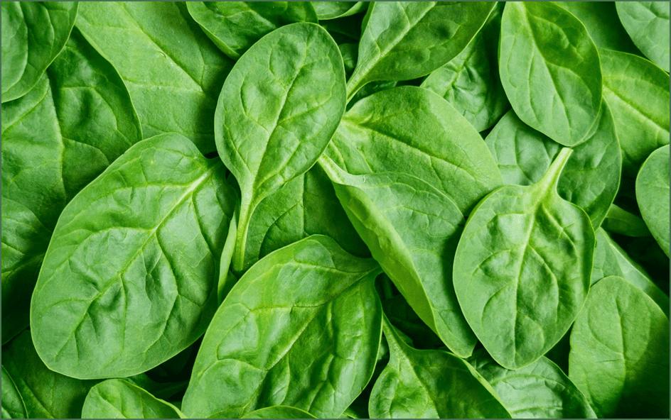 Photo of Брзорастечки зеленчук – посејте во септември, јадете веќе во октомври
