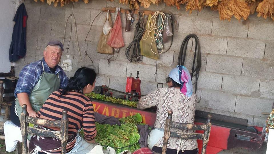 Photo of Земјоделците велат дека се приморани да го намалуваат сопственото производство