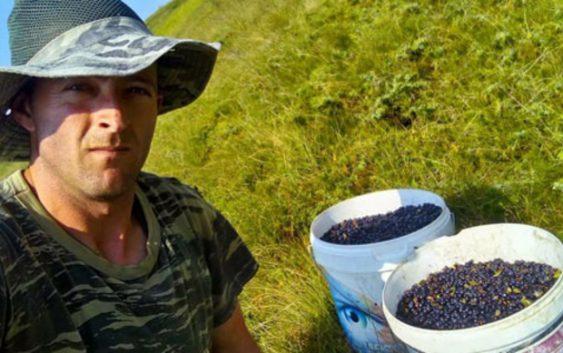 За килограм боровинки од Кожуф се плаќаат до 150 денари