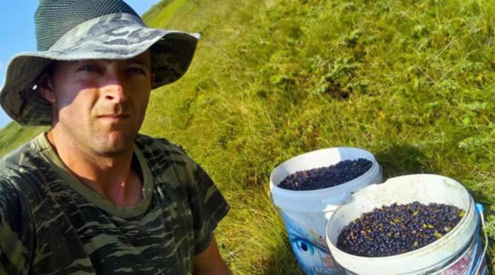 Photo of За килограм боровинки од Кожуф се плаќаат до 150 денари