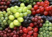Во полн ек бербата на грозјето, квалитетот слаб
