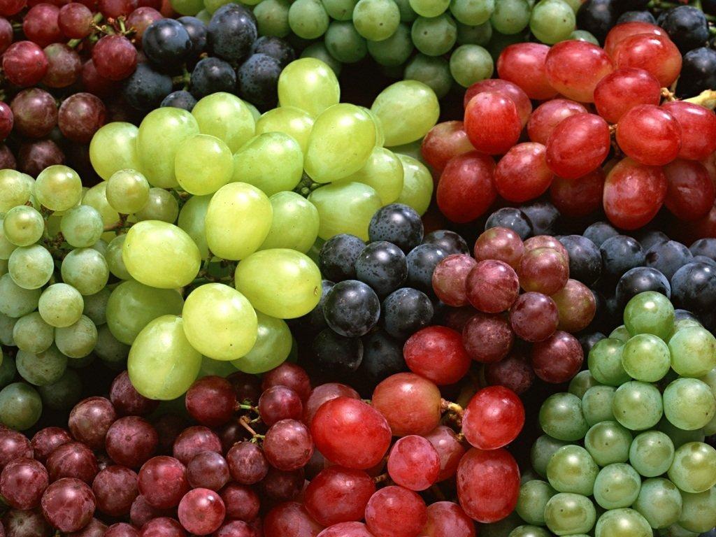 Photo of Во полн ек бербата на грозјето, квалитетот слаб