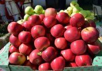 """Ќе се берат јаболките и ќе се слуша """"Црвена јабука"""": Почнува манифестацијата во Ресен"""