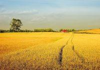 Македонија е втора по најнеобработена земјоделска површина во Европа