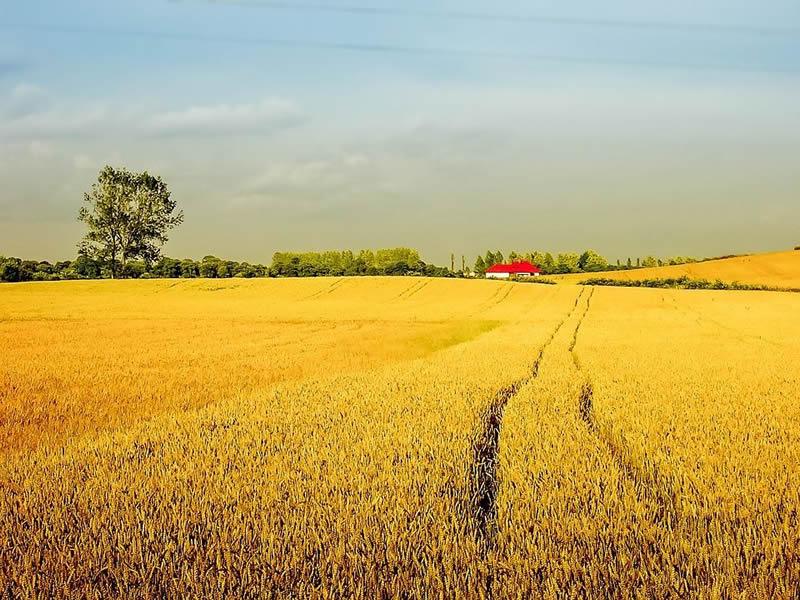 Photo of Македонија е втора по најнеобработена земјоделска површина во Европа