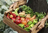 """За програмата """"Млад земјоделец"""" пријавени 1.045 земјоделски производители"""
