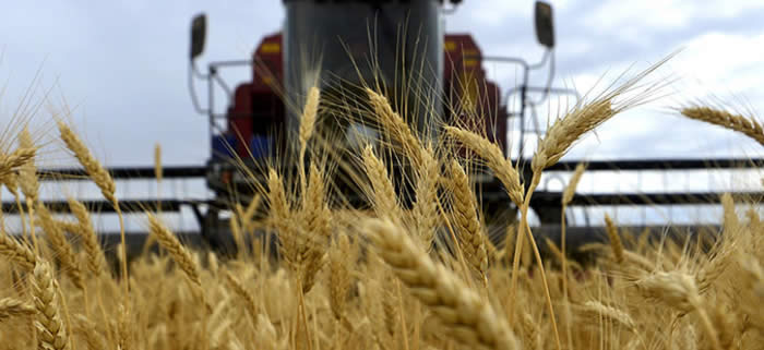 Photo of Македонија извезува пченица, а увезува брашно