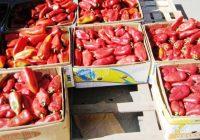 """Земјоделците задоволни од откупната цена на """"ајварката"""""""