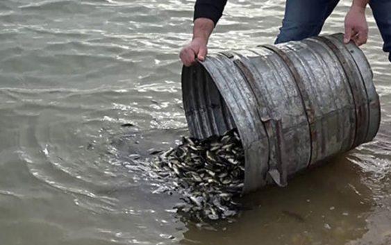Почна порибувањето со крап на Дојранското езеро