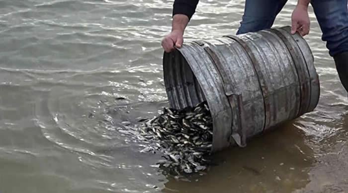 Photo of Почна порибувањето со крап на Дојранското езеро