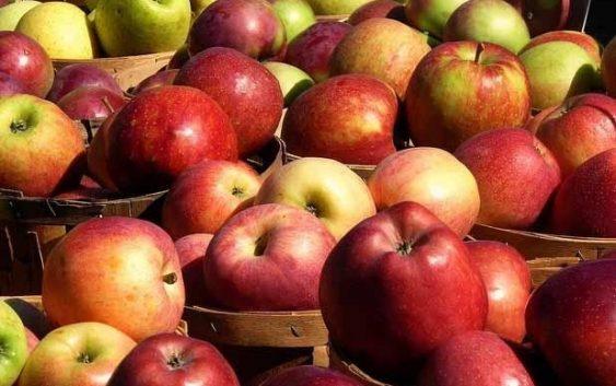 Преспанските овоштари задоволни од цената на јаболката
