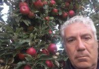 Менде Ивановски од с. Волкодери, ужива во бербата на јаболка