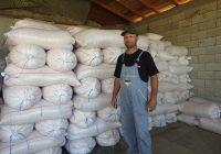 Жетвата на пченката е при крај, земјоделците задоволни од приносите, но не и од цената