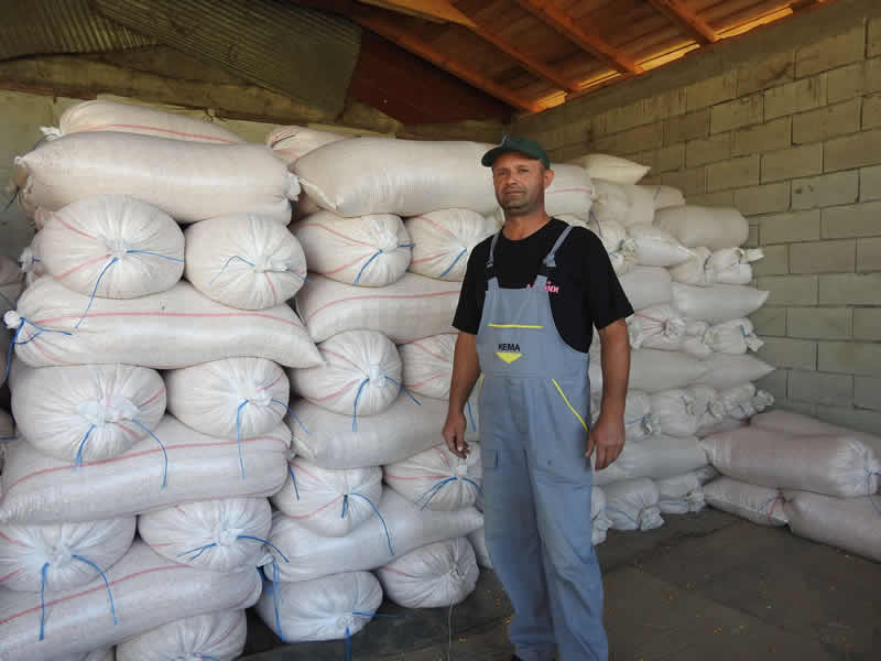 Photo of Жетвата на пченката е при крај, земјоделците задоволни од приносите, но не и од цената