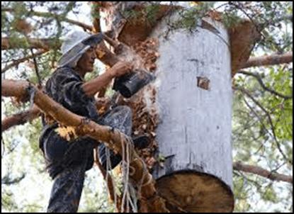 Photo of Пчеларење во дрво – враќање кон природата