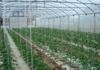Искористувањето на термалните води во градинарството се уште само ветување