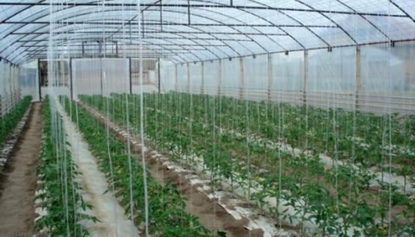 Photo of Искористувањето на термалните води во градинарството се уште само ветување