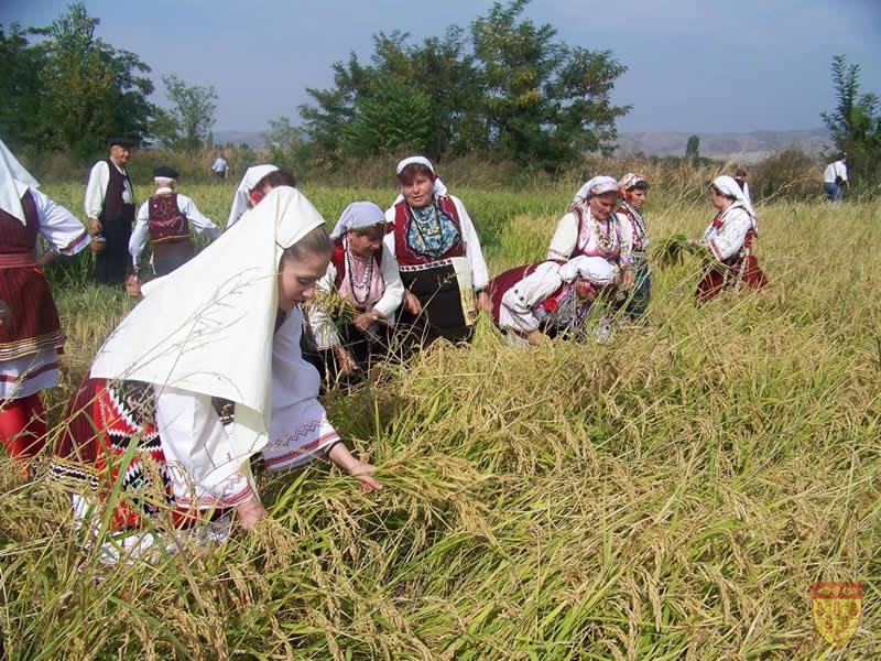 Photo of Почна жетвата на оризот во кочанско