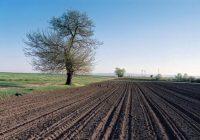 Индекси на цените во земјоделството за септември