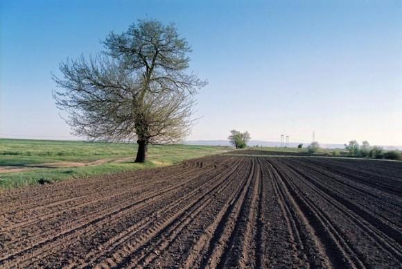 Photo of Индекси на цените во земјоделството за септември