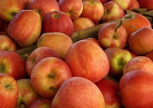 МЗШВ работи на интервентна мерка за јаболкото