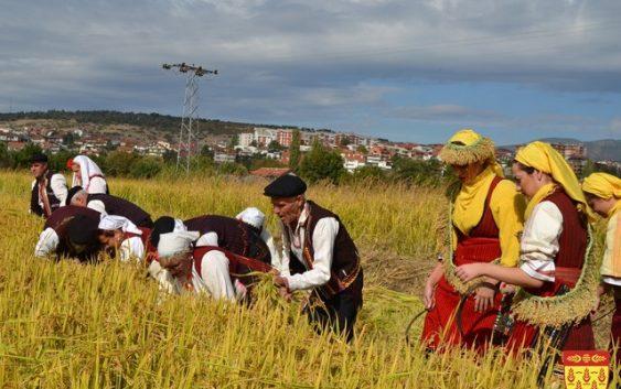 Се увезува ориз од Грција наместо да се произведе во Македонија