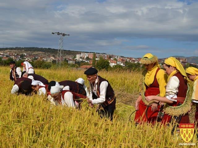 Photo of Се увезува ориз од Грција наместо да се произведе во Македонија