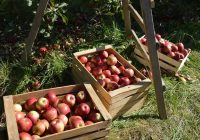 Не можеле да најдат работа во Ресен, а денес нивните јаболки ги јадат шеици од Катар