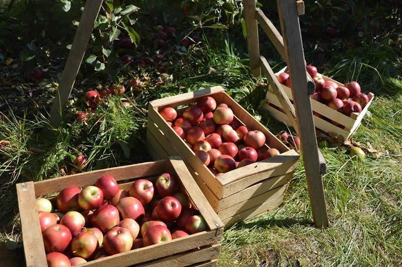 Photo of Не можеле да најдат работа во Ресен, а денес нивните јаболки ги јадат шеици од Катар