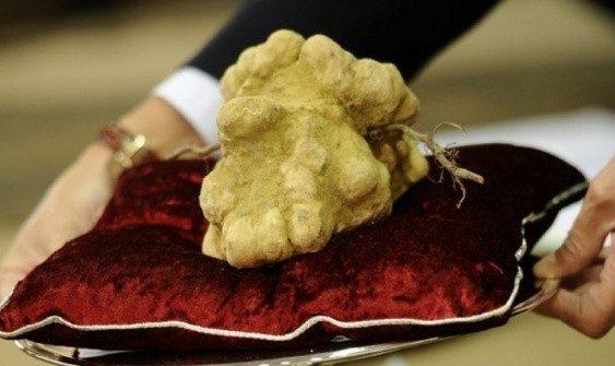 Бела тартуфи продадена за рекордни 85.000 евра