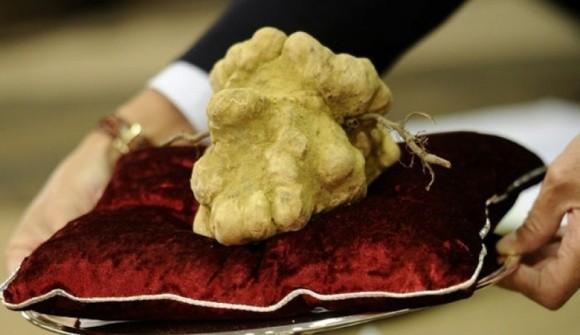 Photo of Бела тартуфи продадена за рекордни 85.000 евра
