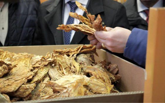 Започна откупот на тутунот, годинава поголем број на склучени договори и издадени евидентни листови