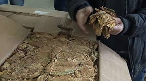 Во Велешко просечната цена на тутунот 210 денари